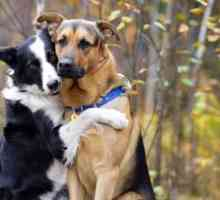 A border collie and a german shepherd love the idea of hugging it out