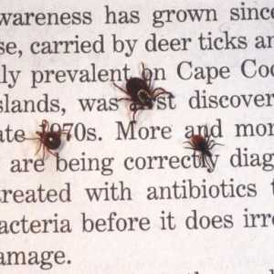 Tick season is supposed to be brutal this year